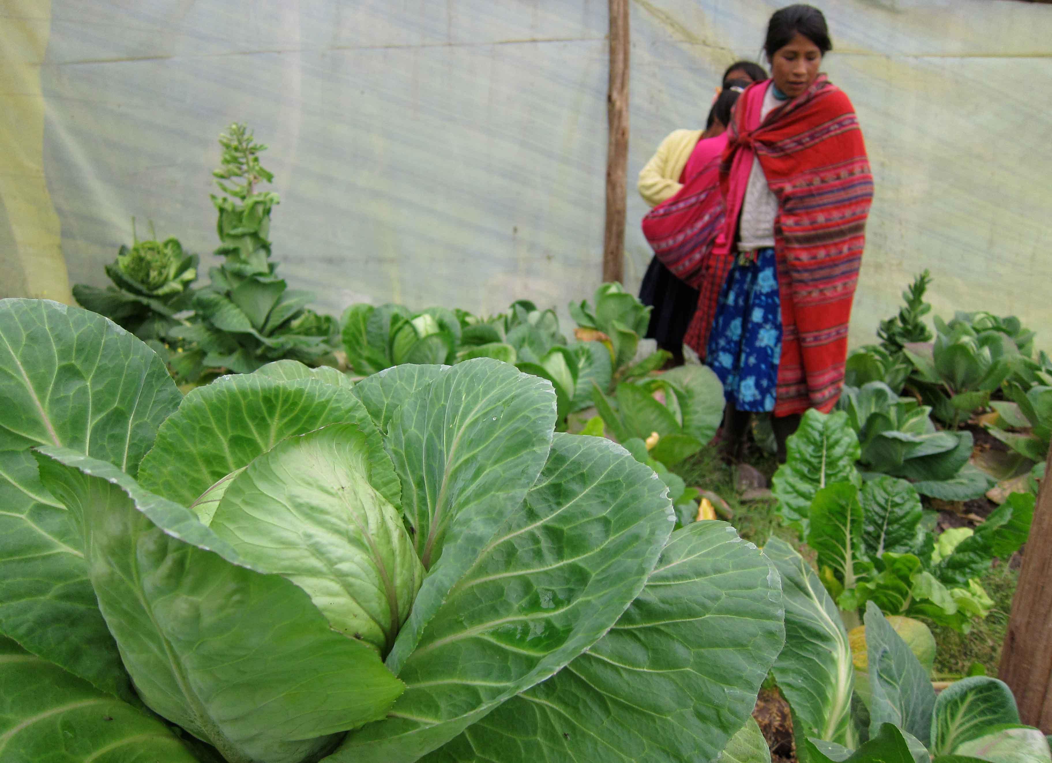 Agriculture Initiative